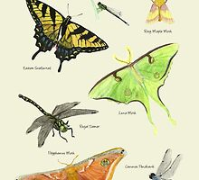 Butterflies and Dragonflies by Holly Faulkner