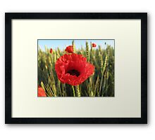 Poppy and Wheat Framed Print