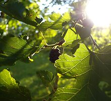 Morning Mulberries! by Cherie Balowski