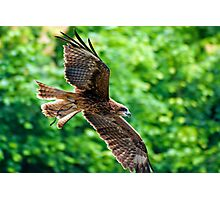 Soaring Eagle Photographic Print