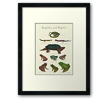 Amphibians and Reptiles Framed Print