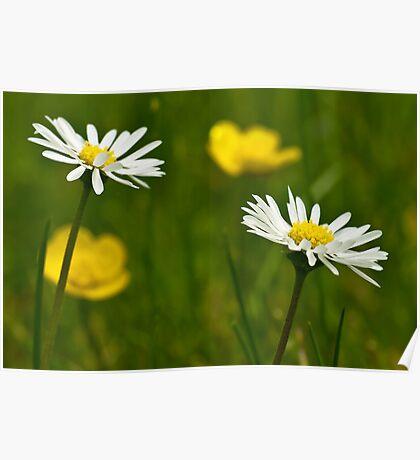 White & Yellow Poster