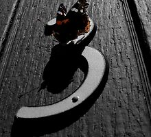 """Red Admiral Butterfly - """"Door Number Three"""" by Muninn"""