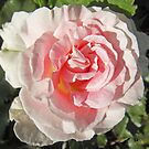 Aphra's Rose by sarnia2