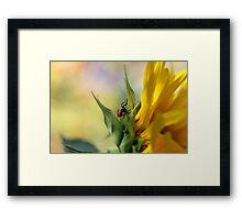 Spider on sunflower (Malta) Framed Print