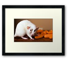Carrots Galore! Framed Print