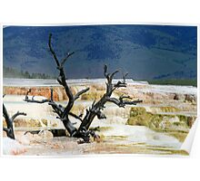 Mammoth Hot Springs Poster