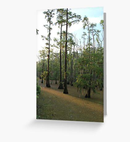 Sundown Swamp - Sam Houston Park Greeting Card