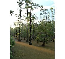 Sundown Swamp - Sam Houston Park Photographic Print
