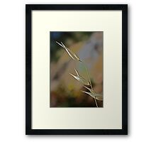 Grass Grains' Completion (View Large) Framed Print