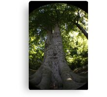 Dads tree Canvas Print