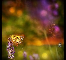 brown butterfly by Sonia de Macedo-Stewart
