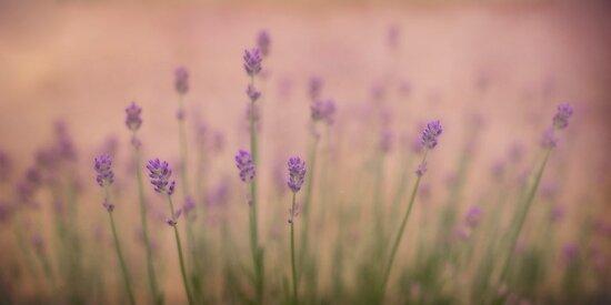 Summergarden by Priska Wettstein