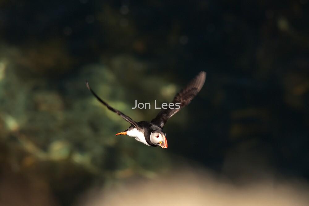 puffin in flight by Jon Lees