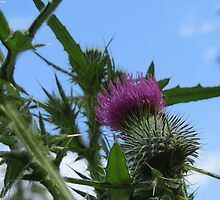 Thistle From Below by Penny Ward Marcus