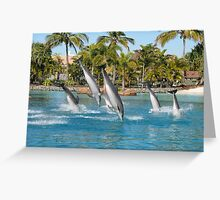 Diving Dolphins Greeting Card