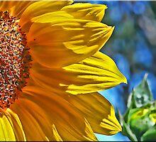 Sunny by Kym Howard