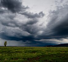 Antelope Flats In June by Wil Bloodworth
