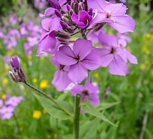 Purple Flowers by Ingvar Bjork Photography