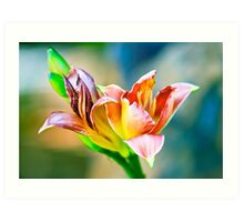 Day Lily Flower Art Print