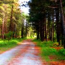 TAKE THE LONG ROAD HOME  by Marie  Morrison