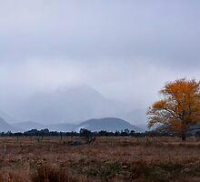 The autumn tree by Odille Esmonde-Morgan