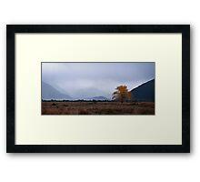 The autumn tree Framed Print