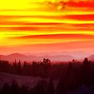 California Sunset by marcy413