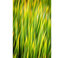 Green Nature Abstract Photographic Print