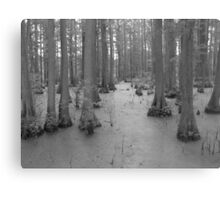 Bald Cypress Swamp Canvas Print
