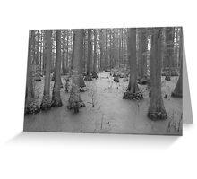 Bald Cypress Swamp Greeting Card