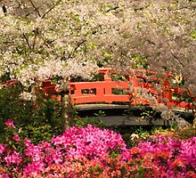 Red Bridge And Blossoms by James Eddy