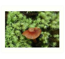 Mutant fungi Art Print