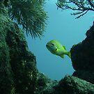 I see something fishy  - Key Largo, FL by April  West