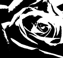 Artsy Black And White Rose  by Sandra Foster