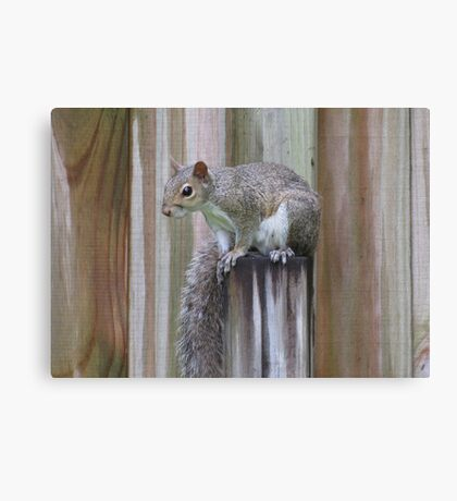 Waiting for Peanuts Canvas Print