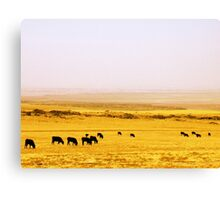 Dine' Cows Canvas Print