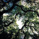 Tree beauty by marcy413