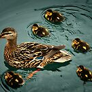 Duckling Flotilla by Xcarguy