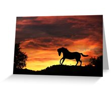 Silhouette Horse with Firey Sunset Greeting Card