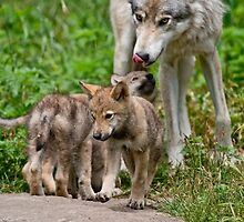Timber Wolf And Pups by WolvesOnly