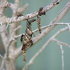 Wasp nest by bassgirl1970