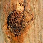Bark of gum tree..... by bassgirl1970