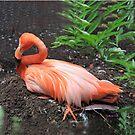 Flamand Rose - Flamingo by Gilberte