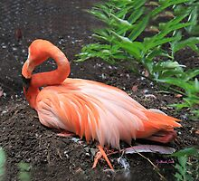 Flamand Rose - Flamingo by Gilberte