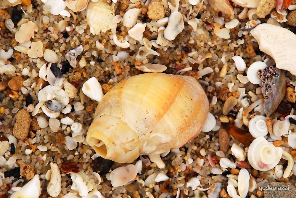 Seashells V by gcdepiazzi