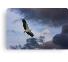 Solitary Hunting Canvas Print