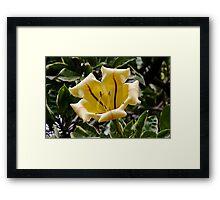 Honolulu Lilly Framed Print