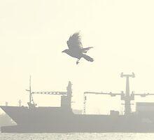 In flight by bjoernlexius
