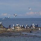 Ocean Birds by Melissa Park
